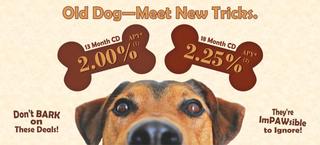 Old Dog—Meet New Tricks.